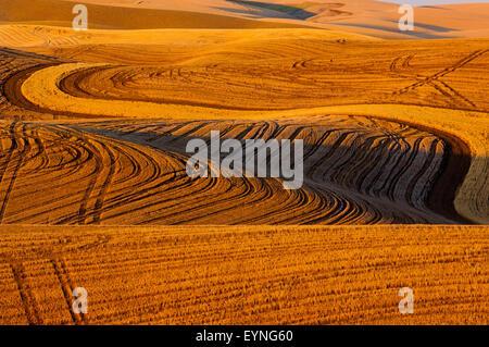 Bereich der Stoppeln aus geernteten Getreide in den Hügeln von Palouse Region von Washington - Stockfoto