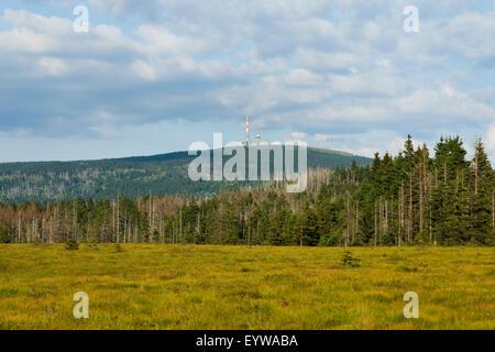 Torfhausmoor hob Moor mit Blick auf den Brocken Berg, Nationalpark Harz, Niedersachsen, Deutschland - Stockfoto