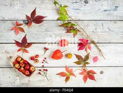 im Herbst Ansammlungen von Holzäpfel, Hagebutten, Blätter von wildem Wein und Lampions Stockfoto