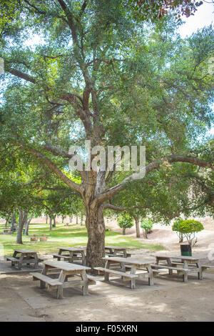 Halbes Dutzend Picknicktische Rest unter dem Schatten einer großen Eiche im Val Verde, Kalifornien. - Stockfoto