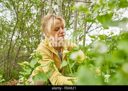 Reife Frau, Gartenarbeit, Unkraut hochziehen - Stockfoto
