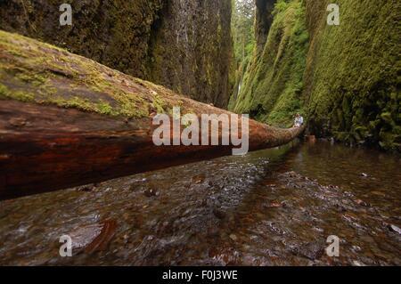 Heraus auf einem Glied entspannt müde Wanderer unter einer dramatischen Schluchten in der Columbia River Gorge. - Stockfoto