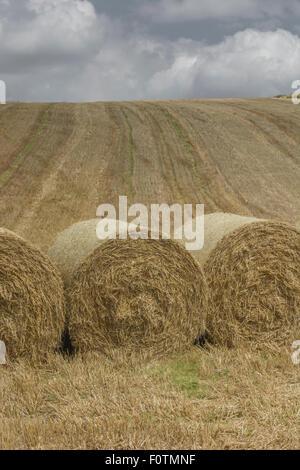 Heu-/Strohballen und stoppel Feld nach der geernteten Getreide. Fokus auf der unteren Hälfte des Bildes. Metapher - Stockfoto