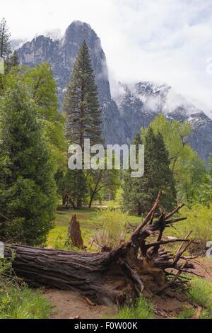 Blick auf Mounain Nebel und umgestürzten Baum, Yosemite-Nationalpark, Kalifornien, USA - Stockfoto