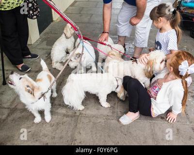 Herne Bay, UK, 23. August 2015.  Eine Reihe von süßen Jack Russells und Shih-Tzus treffen sich einige vorbeifahrenden - Stockfoto