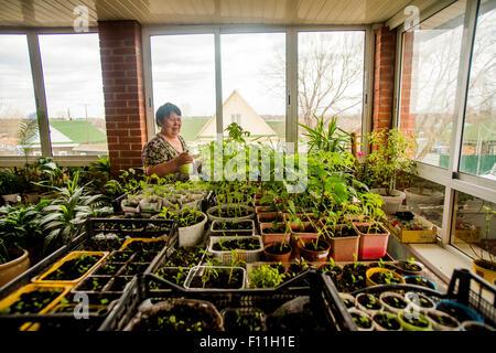 Kaukasische Frau Zimmerpflanzen gießen - Stockfoto