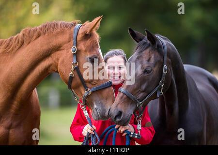 Hannoveraner Pferd Frau führt zwei Stuten - Stockfoto