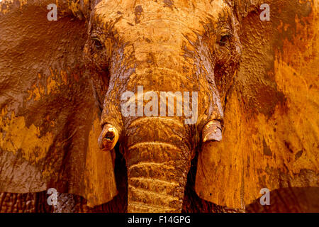 Afrikanischer Elefant (Loxodonta Africana) männlichen schlammbedeckt an einem Wasserloch, Tsavo East Nationalpark, - Stockfoto