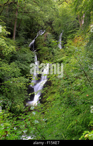 Am Stock Ghyll Kraft in der Nähe von Ambleside, Cumbria, Nationalpark Lake District, England, UK. - Stockfoto