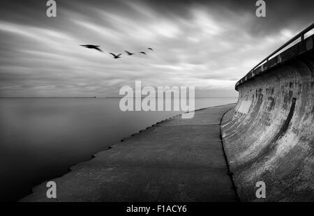 Gänse mit verschwommenen Wolken & Wasser - Stockfoto