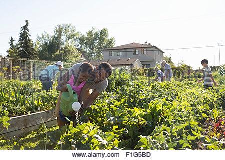 Vater und Tochter Bewässerung Pflanzen Gemeinschaft Gemüsegarten - Stockfoto