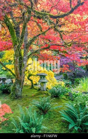 Japanische Stein Laterne und Herbst Farbe, japanischer Garten, Butchart Gardens, Brentwood Bay, Vancouver Island, - Stockfoto