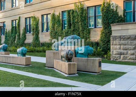 Buffalo-Trails Kunst im öffentlichen Raum Installation, Skulptur, Innenstadt von Calgary, Alberta, Kanada - Stockfoto