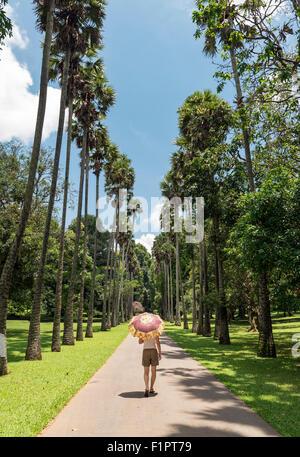 Palmyra-Palme (Borassus Flabellifer) Avenue am königlichen botanischen Garten in Peradeniya in der Nähe von Kandy, - Stockfoto