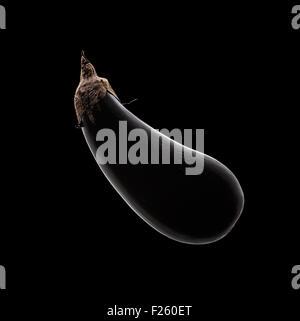 Aubergine (Aubergine) Stillleben mit Felge Licht auf schwarzem Hintergrund von oben