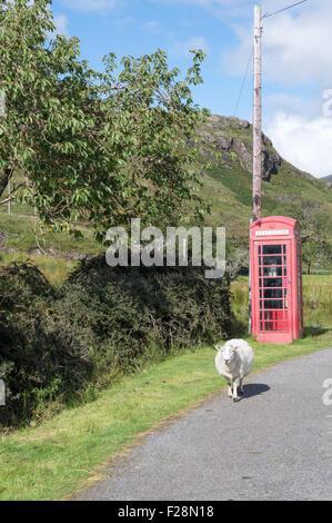 Schottische Landschaft mit einem Schaf in der Nähe eine traditionelle rote Telefonzelle - Stockfoto