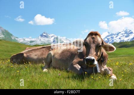 Kühe auf einer Almwiese. Melchsee-Frutt, Schweiz - Stockfoto