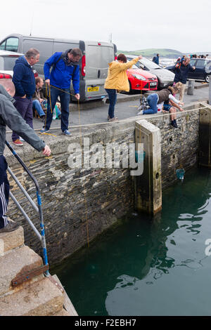 Urlauber, Angeln für Strandkrabben in Padstow, Cornwall, Ködern Hafen mit Netze - Stockfoto