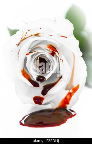 Weiße Rosenblüten mit frischem Blut - Stockfoto