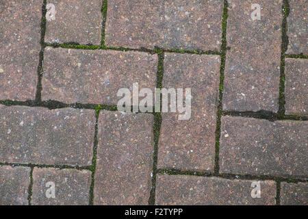 Block-Pflasterung mit grünem Moos zwischen den Steinen - Stockfoto