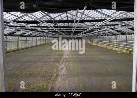 Leere Gewachshaus Knoblauchsland Nurnberg Stockfoto Bild 87844191