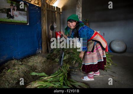 Ernte von Mais in einem Haus der Bergstämme der Hmong - Stockfoto