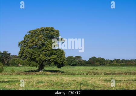 Chichester, West Sussex, England, 27. September 2015. Strahlend blauem Himmel und Sonnenschein in einem Feld in - Stockfoto
