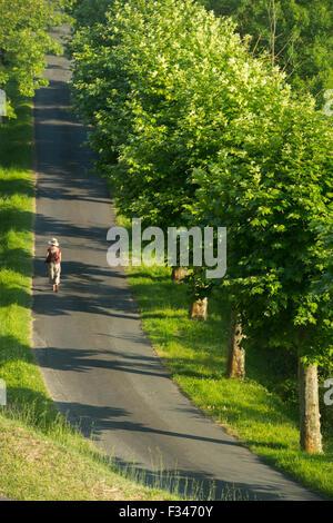 Wendy zu Fuß entlang eines Baumes gesäumten Allee in Beaumont du Périgord, Pays de Bergerac, Dordogne, Aquitaine, - Stockfoto