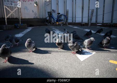 Gruppe von Tauben auf Asphalt Schatten und Sonnenlicht stehen - Stockfoto