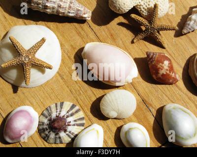 Verschiedene Muscheln, getrocknete Seesterne - Stockfoto