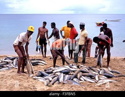 lokale fischer sortieren die tage fangen von fischen in castara strand tobago trinidad und. Black Bedroom Furniture Sets. Home Design Ideas