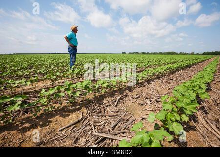 Feld, Landwirt, Kontrolle, Baumwolle, Furche, Arkansas - Stockfoto