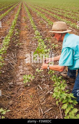 Feld, Landwirt, Unkraut, Kontrolle, Baumwolle, Arkansas - Stockfoto