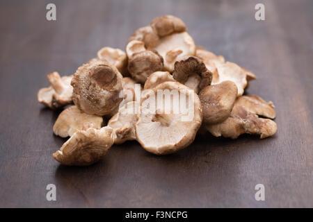 Lentinula Edodes. Shiitake-Pilze auf einem Holzbrett. - Stockfoto