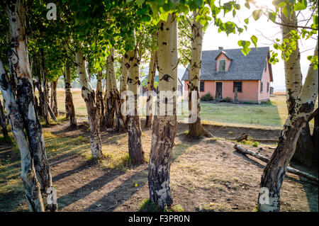 Historisches Haus Pink Stuck; John Moulton Homestead (c. 1910), Mormonen Zeile Altstadt; Grand Teton Nationalpark; - Stockfoto