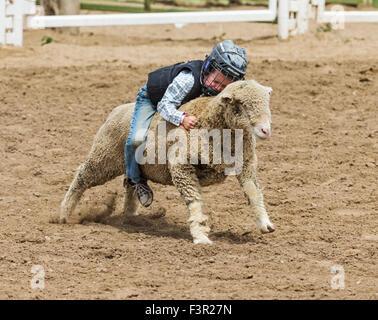 Kind konkurriert bei Schafen Reiten, Mutton Bustin ', Event, Chaffee County Fair & Rodeo, Salida, Colorado, USA - Stockfoto
