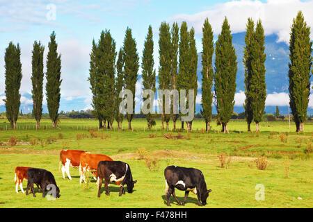 Ländliche Idylle im chilenischen Patagonien - Stockfoto