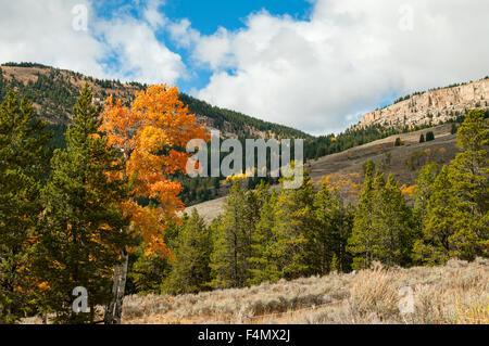 Herbstlaub im Bighorn Range, Wyoming, USA - Stockfoto
