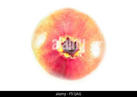 Rote Granatapfel-Frucht, isoliert auf weißem Hintergrund - Stockfoto