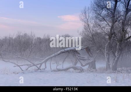 Deutschland, Nordrhein-Westfalen, Wahner Heide, Aggeraue, Schneebedeckte Bäume in der Aggeraue Im Morgennebel, - Stockfoto