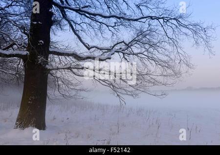 Deutschland, Nordrhein-Westfalen, Wahner Heide, Aggeraue, Schneebedeckte Bäume Im Morgennebel, - Stockfoto