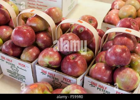 Gemeinsame Macoun Apfel Stockfoto, Bild: 39396458 - Alamy &GS_82