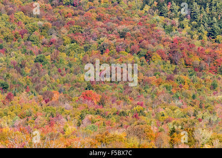 Herbstfarben in das Laub der Bäume, auf dem Kancamagus Highway, White Mountains, New Hampshire, New England USA - Stockfoto