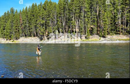 Ein Fliegenfischer wirft für Cutthroat-Forelle auf dem Yellowstone River in der Nähe von Fischerei-Brücke im Yellowstone - Stockfoto