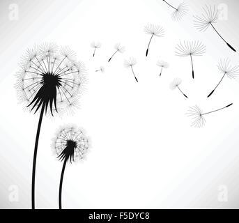 Löwenzahn Wind Blow Blume - Stockfoto