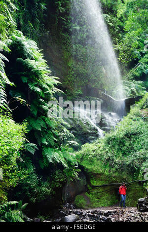 Laurel Wald, Los Tilos-Biosphären-Reservat, La Palma, Kanarische Inseln, Spanien, Europa - Stockfoto