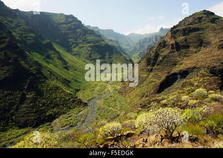 Barranco de Santiago, La Gomera, Kanarische Inseln, Spanien, Europa - Stockfoto