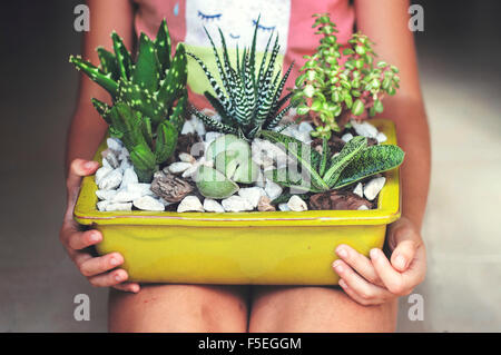 Mädchen, sitzen, halten eine Anzeige von Sukkulenten - Stockfoto