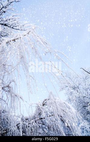 Ansicht von unten auf die hängenden Weidenzweigen auf Eis im Schnee. Winter Hintergrund. - Stockfoto