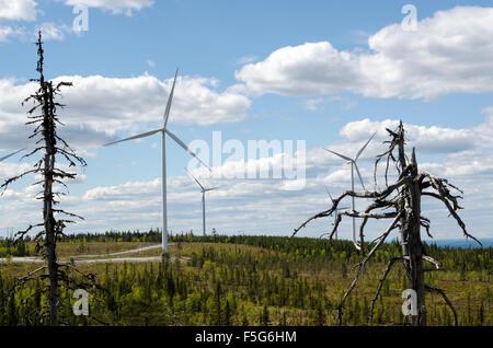 Einige Windmühlen auf einem schwedischen Berg mit einigen alten Tannen im Vordergrund, Bild aus Nordschweden. - Stockfoto